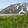 blomster og snø på samme tid i fjellene